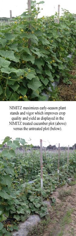 cucumber-plot1