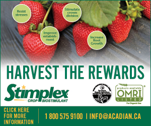 Stimplex_Strawberry_Online_banner_300x250_1214
