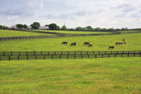 Horse-Farm-sm