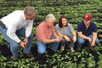 (L to R) Bob Conrad (Harris Moran Seed Co), Rick Roth, Carole Cuffy (Harris Moran Seed Co), and Ryan Roth visit while inspecting harvested radish field at Roth Farms