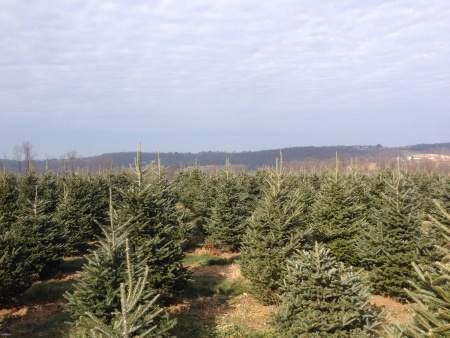 Where Does Your Christmas Tree Come From Southeast Agnet