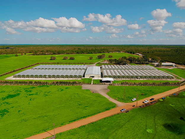 The Citrus Nursery Industry Is Undergoing A Lot Of Changes As Hlb Continues To Cause Pressure Growers Are Having Replant Their Groves In Order Keep