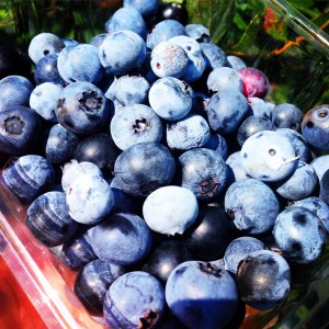 Blueberries Covered Under Produce Safety Rule