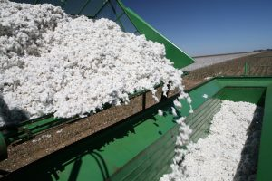 cotton yield