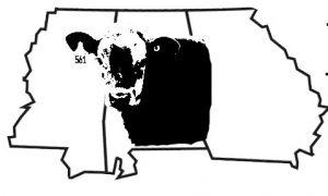 deep-south-stocker-logo