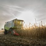Combine harvesting crop corn
