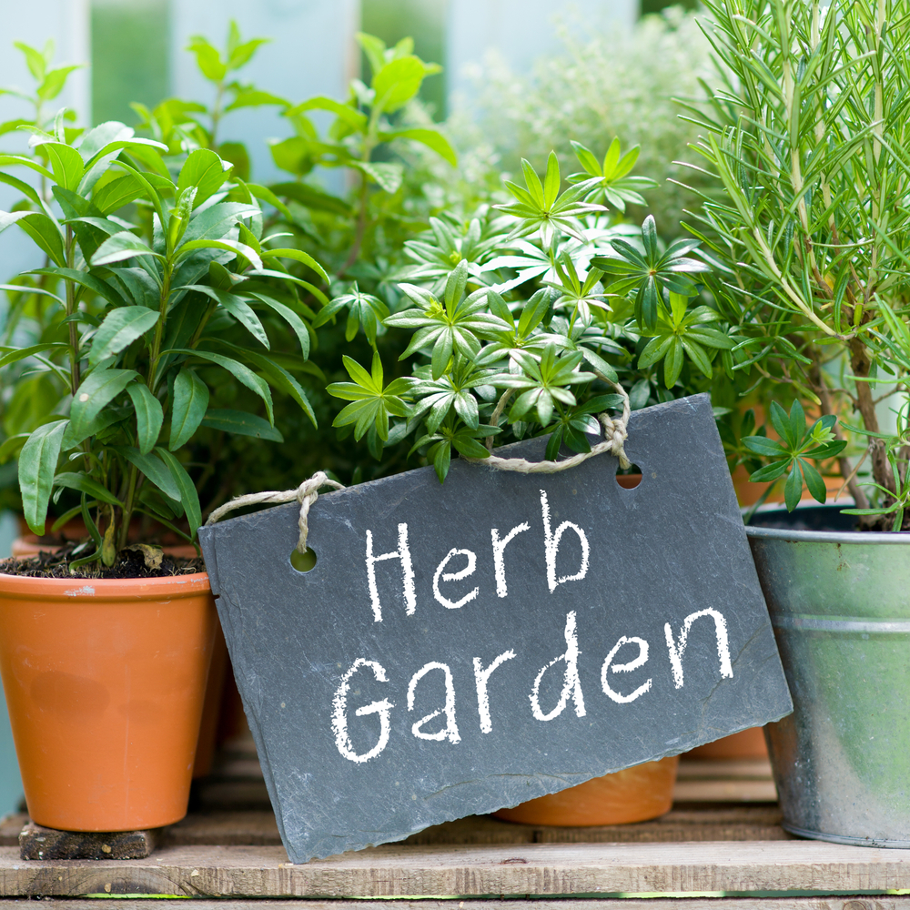 It Is Time To Get Gardening! Cathy Isom Has Some Tips For Starting A Flower  Garden. Thatu0027s Coming Up On This Land Of Ours.
