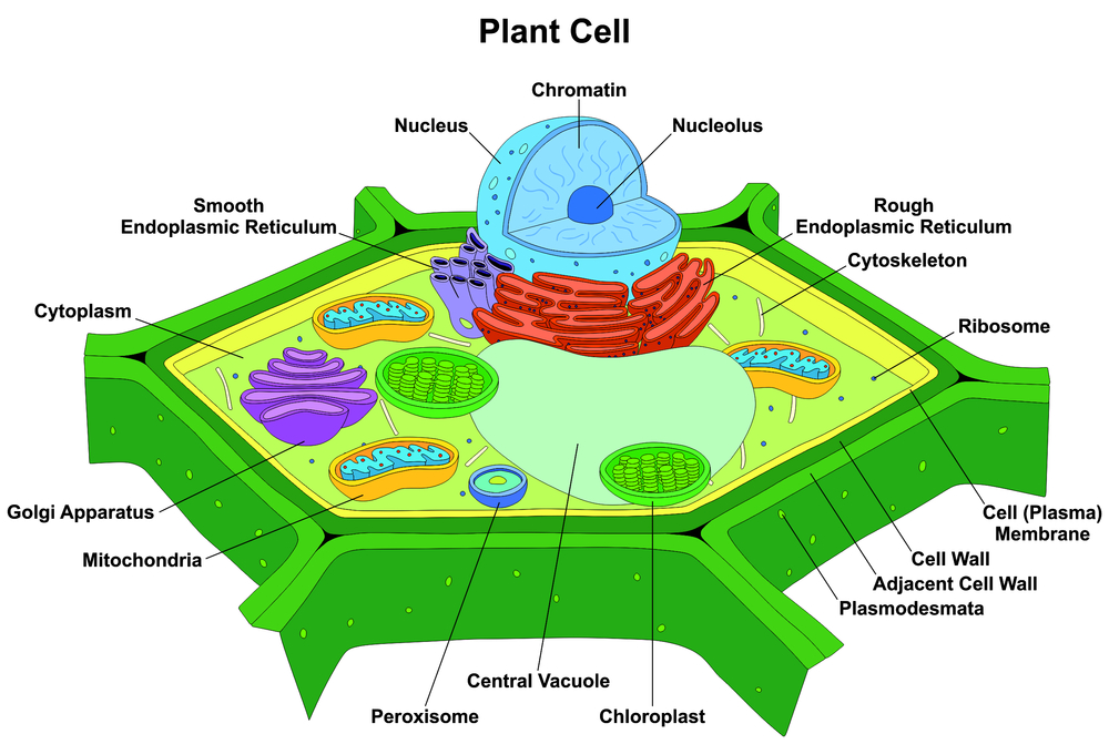 Cellular Agriculture