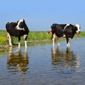 wotus rule repeal deadline