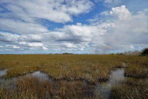 Florida wetlands-Everglades