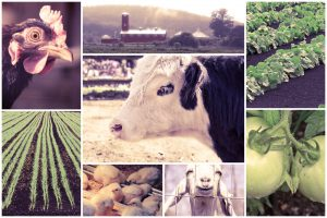 mosaic-of-farm-animals-and-agricultural-imagery-in-collage livestock