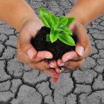new farm bill tree-planting-in-arid-areas