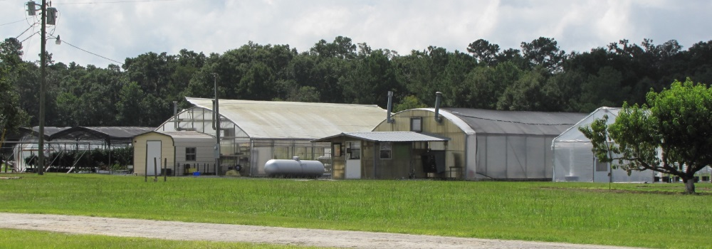 uf ifas suwannee-valley-agricultural-extension-center