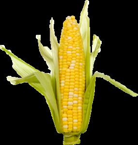 gcga-georgia-corn-growers-assoc-corncob