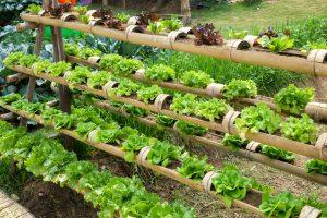 Growing Veggies By Vertical Gardening Southeast Agnet