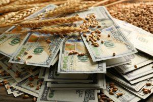 grain traders