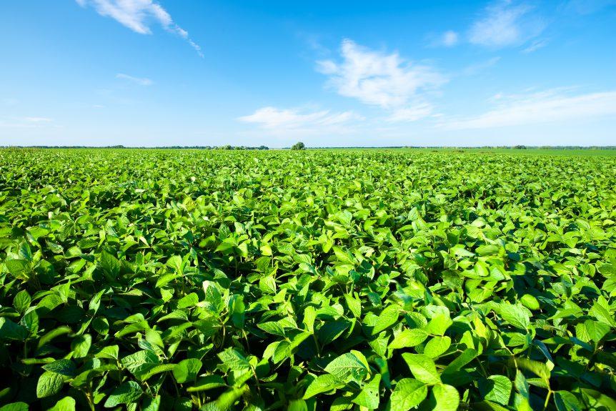 national soybean board