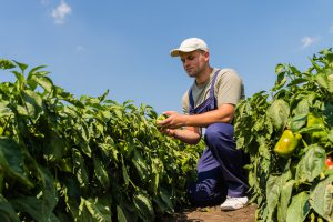 freeze southeastern crops