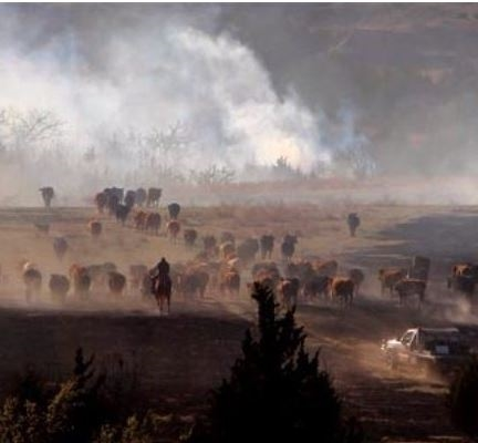 Fire-Kansas Cattle-Anderson Creek