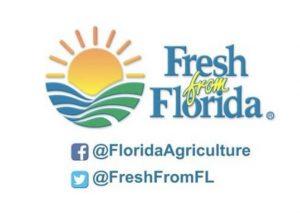 fresh Florida vegetables spotlight