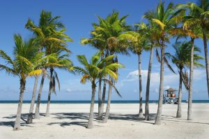 UF Faculty Help Keep Palm Trees Part Of Floridas Fabric