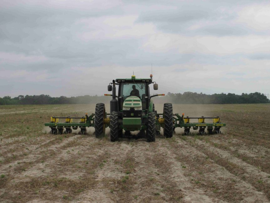 cotton peanuts planting