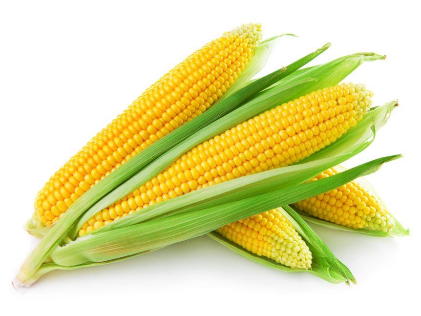 corn forecast