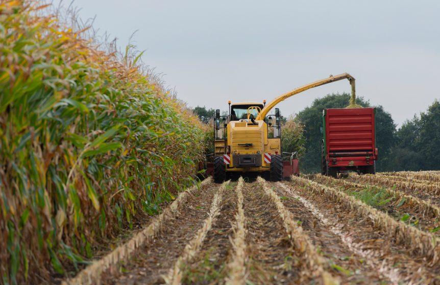 corn sillage