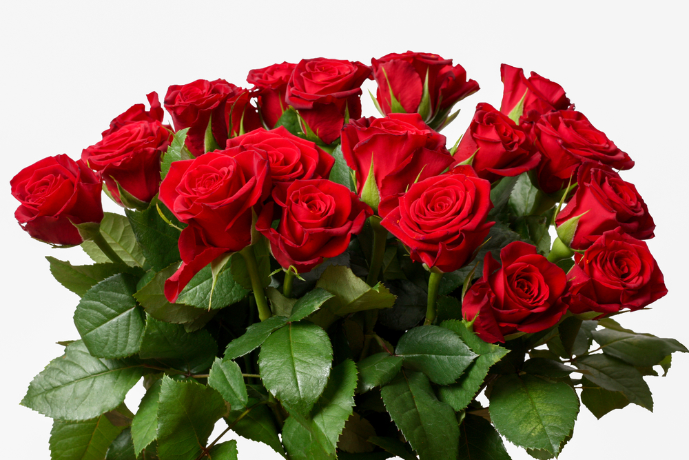 a national day for the flower of love and romance