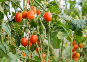 Edible Plants That Are Easy to Grow - Southeast AgNET