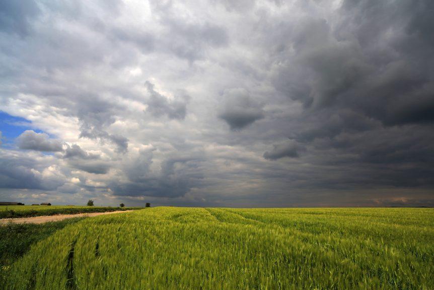 wheat acres