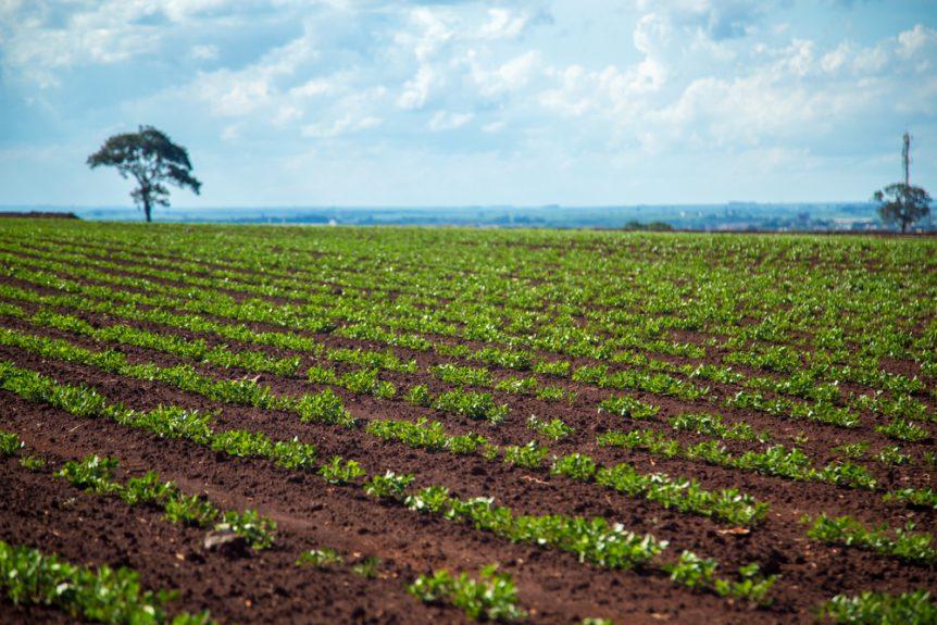 increase peanut acreage