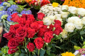 official flower of the month of june southeast agnet