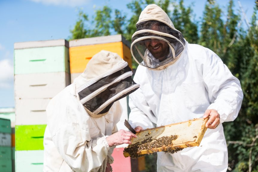 honeybee research