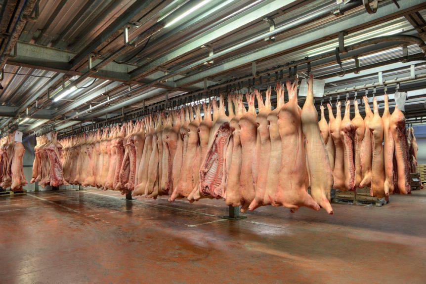 pork industry