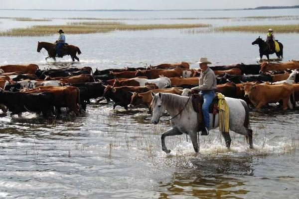 florida cattle drive