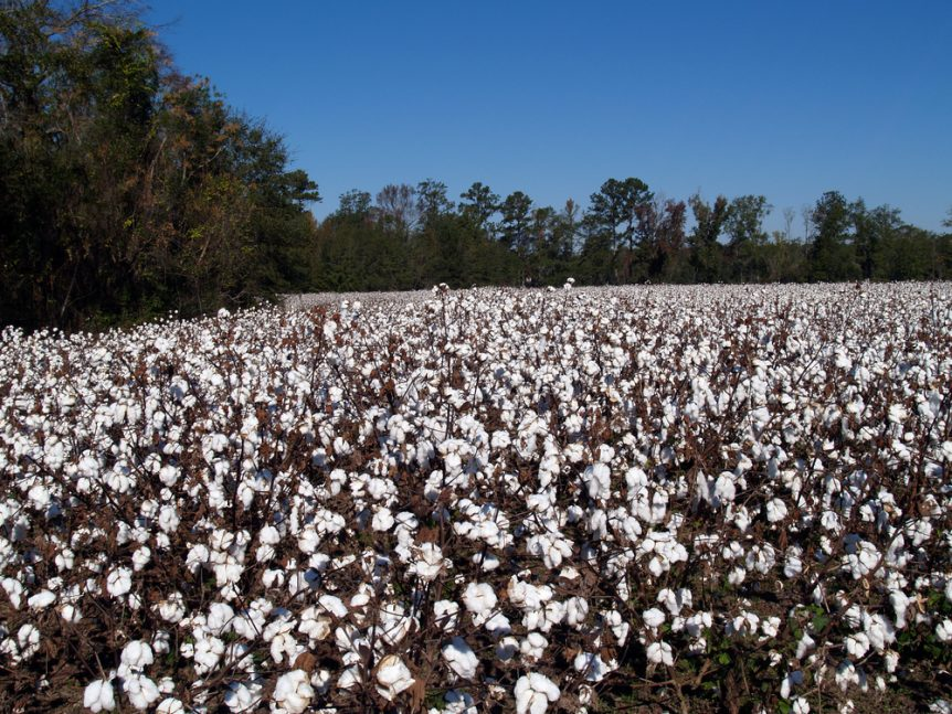 decrease cotton