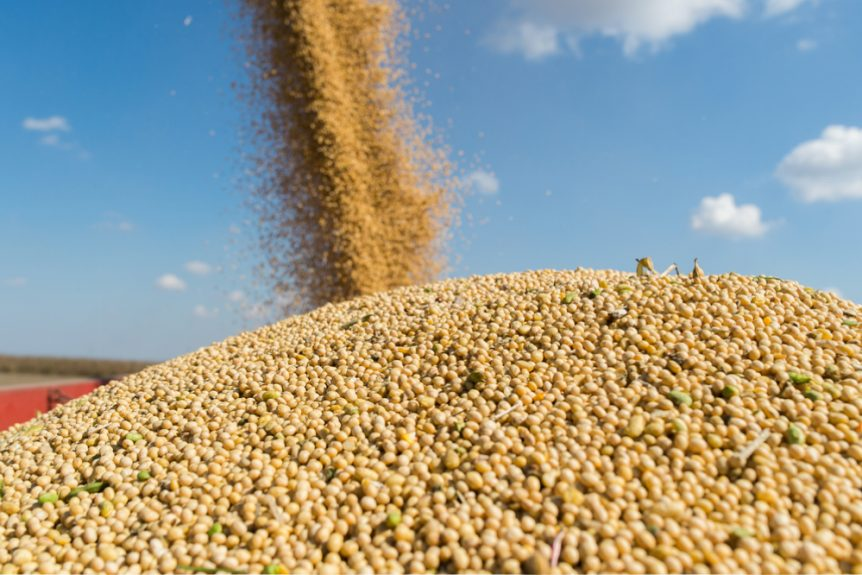 china soybean
