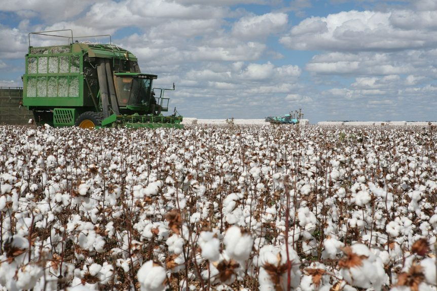 cotton producers