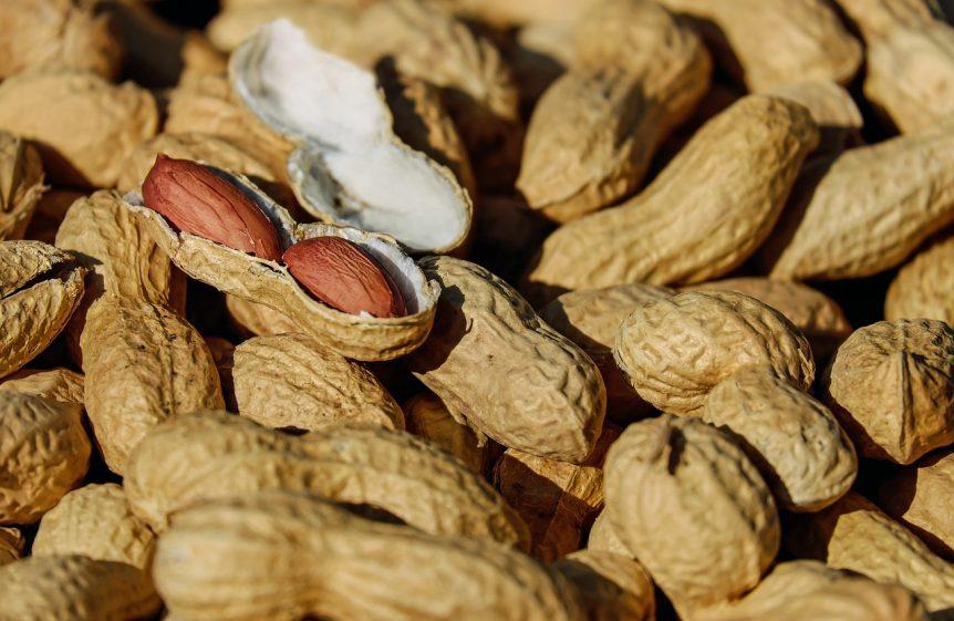 peanut crop