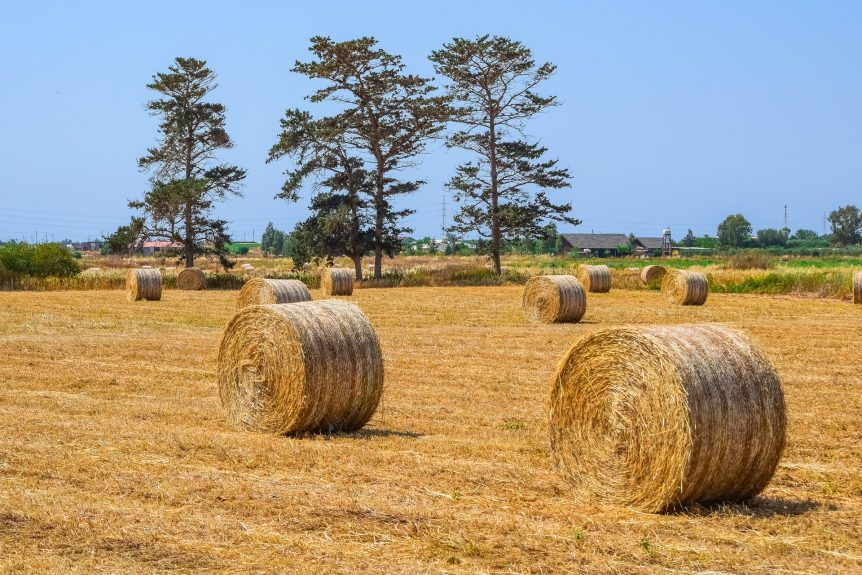 southeast hay
