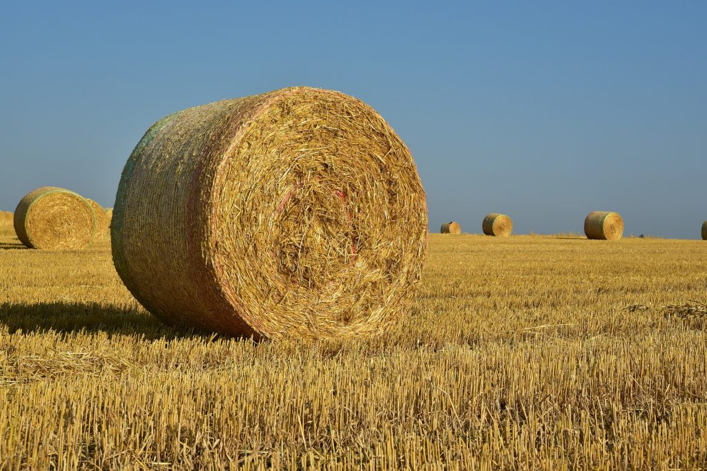 southeastern hay contest