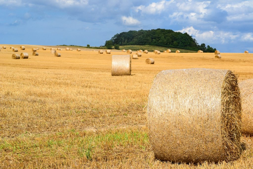 Accepting Entries for Southeastern Hay Contest - Southeast AgNET