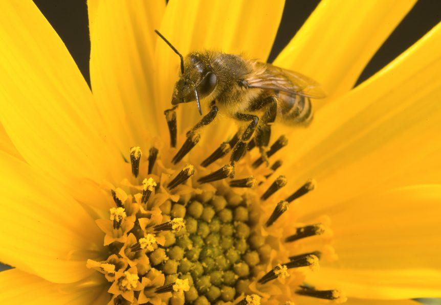 honey bee colonies