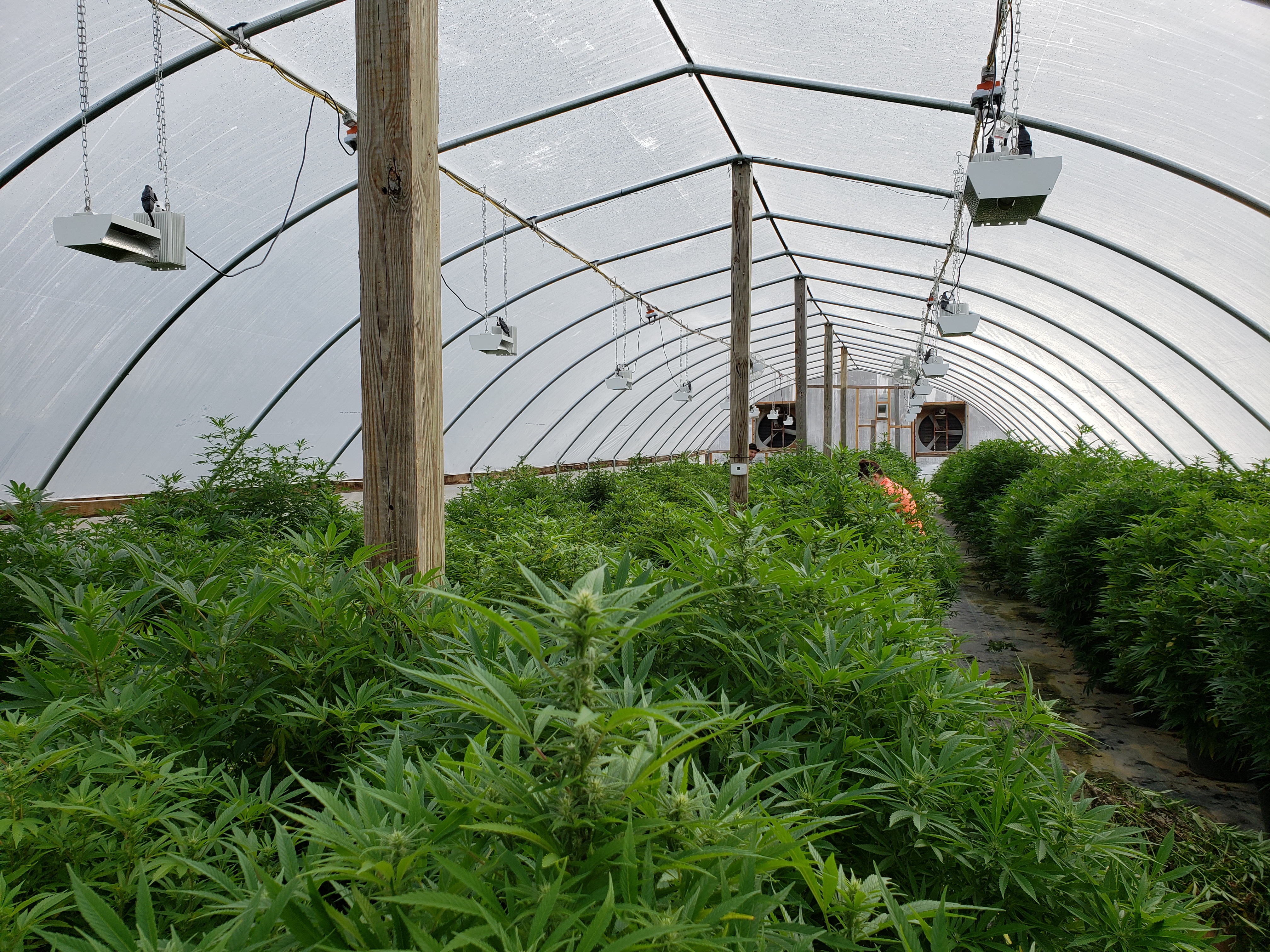 Georgia Submits Revised Industrial Hemp Plan And Rules