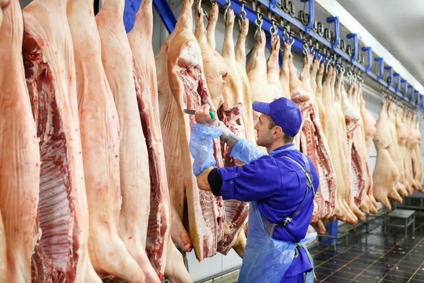 swine slaughter