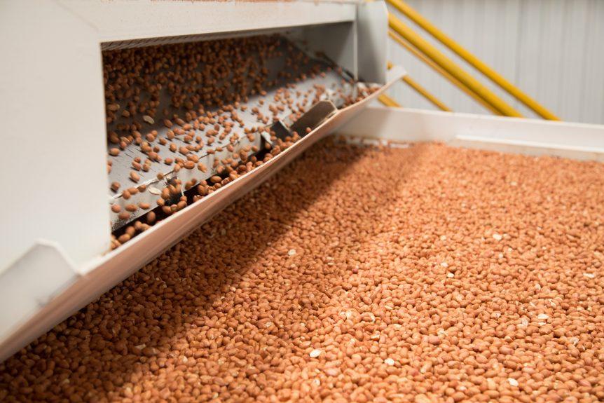 peanut production